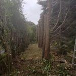 Hedge Restoration After
