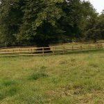 Post and rail fencing protecting TPO trees for MoD in Heytesbury