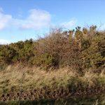 Scrub clearance on Salisbury Plain
