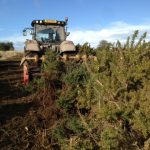 Scrub clearance on Salisbury Plain