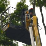 Up with our Cherry Picker, Dismantle acacia trees in Devizes