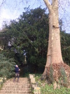 Removal of Redwood at Iford Manor