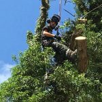 Dismantling trees Tidworth