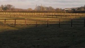 Equestrian post and rail fencing at Manton
