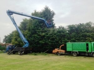 60m Hedge reduction Worton Devizes