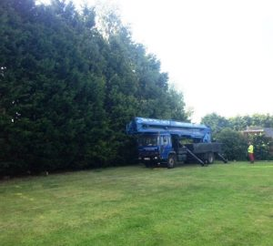 60m Hedge reduction Worton, Devizes