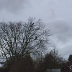 Tree Reduction Chapmanslade