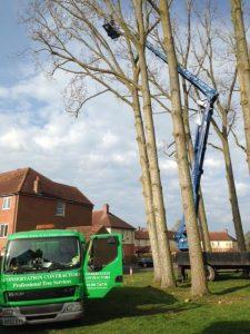 Dismantling 9x30m Poplar Trees in Devizes