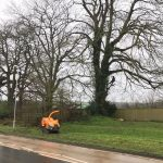 Reduction of Oak Trees in Ludwell, near Shaftesbury