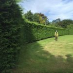 Removal of 70m conifer hedge