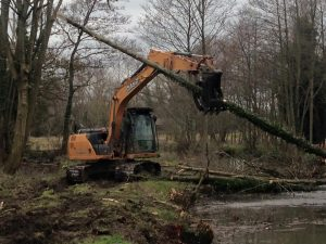 Removal self-set alder trees in Devizes