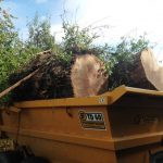 Lightning damaged oak tree dismantled by Conservation Contractors