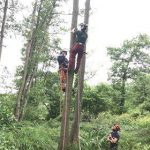 climbing a tree in preparation for making safe