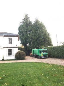 Removal of two large Leyland Cypress trees in Easterton Sands