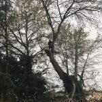Removing overhanging branches