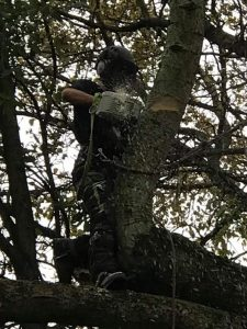 Tree survey health safety tree works Tockington Manor School Oct 2017