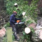 Reduction of willows in Cirencester
