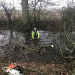 Reduction of roadside willows in Marston Meysey