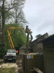 Removing overhanging roadside trees & reduction in formal garden