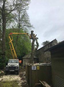 Removing overhanging roadside trees & reduction in formal garden