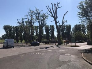 Reduction of poplars in Melksham