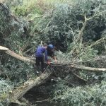 Removing fallen willows from the river at Lacock