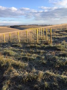 Demarcation posts Salisbury Plain Oct 2018
