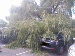 Duty of care to have tree surveyed