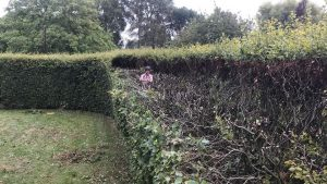 Hedge reduction Keevil