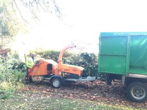 Reduction to trees in Chippenham,