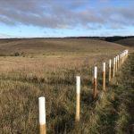 Palisade Fence Salisbury Plain