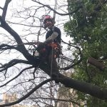 Dismantle 10 trees St Marys Hospital Bristo