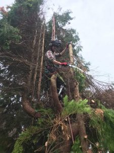 Reduction to conifers