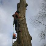 Dismantling a group of decaying beech trees in Bath