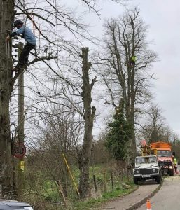 Removal-of-deadwood-from-roadside-tree