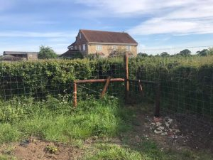Deer Fencing in Melksham