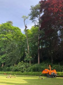 Tree works at The Hall Estate Bradford on 'Avon