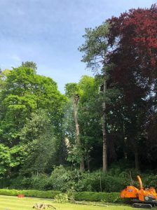 Tree works at The Hall Estate Bradford on Avon