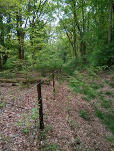 Woodland Project in Savernake Forest