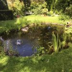 Pond refurbishment Marston complete