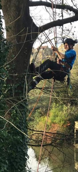 Clearing back overhanging tree