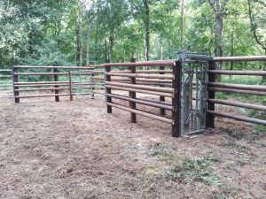 Cattle handling unit at Savernake Forest