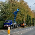 lime tree reduction in Calne for WCC