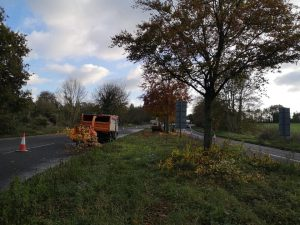 Crown-lifting-of-30-beech-trees-Bodenham-