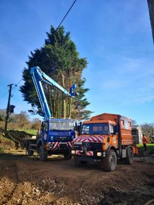 Removal-of-large-conifers-in-Potterne