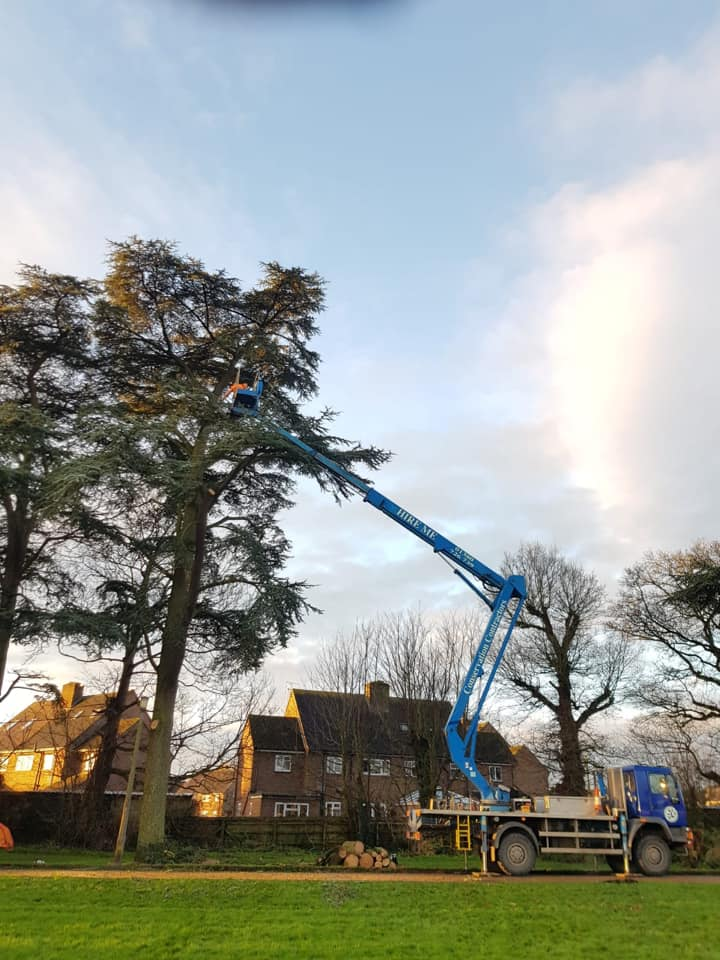 Reducing 10 cedar Trees with our Blue Cherry Picker