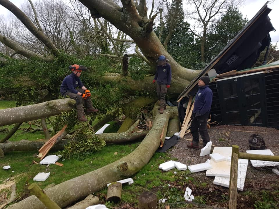 Beech tree take down Feb 2020