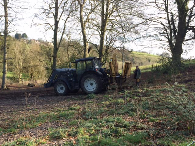 Moving some smaller trees from within a woodland at Southstoke