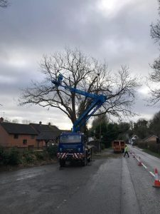 reduction to roadside Ash tree