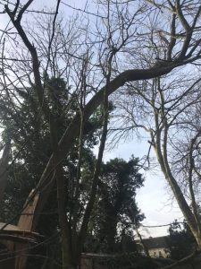 Tree take down in Corsham